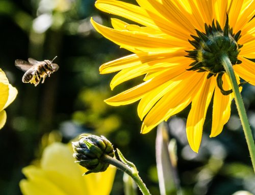 Red de bijen